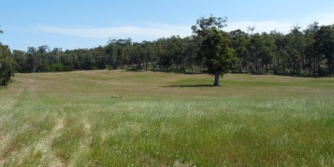 Perennial Pasture Establishment and Grazing