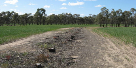 Using Oil Mallee woodchips to increase soil carbon & biology