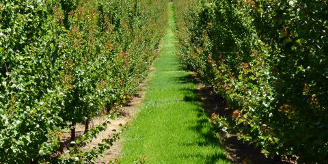 Bolt-on biological strategies for orchard soil health