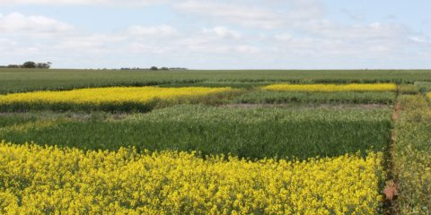 Understanding the implications of rotations in a low rainfall zone of the wheatbelt
