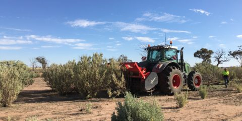 Improving the Productivity of Old Saltbush Stands – Site 1